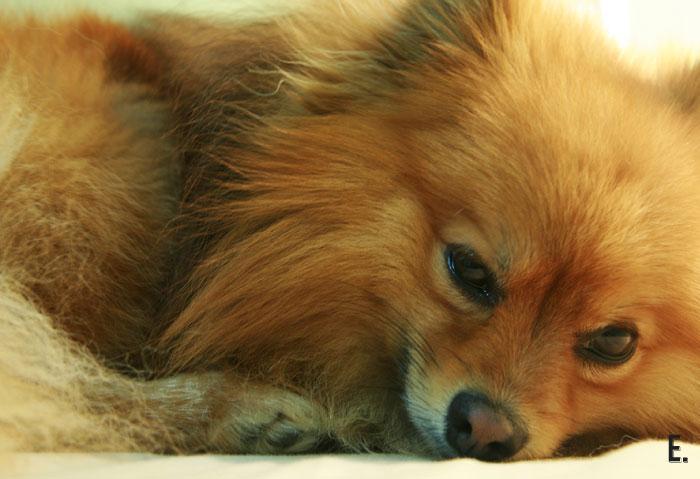 רוצה להיות איש של בוקר? // חיי כלב, אמבד, 2013 אורפז ימין
